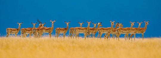 Wildlife Fotograaf van het Jaar