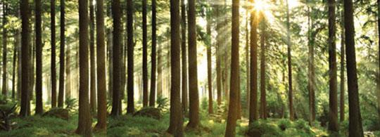 2011: Internationaal Jaar van het Bos