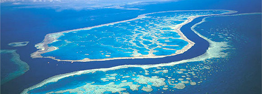 Miraculeuze wederopstanding Great Barrier Reef