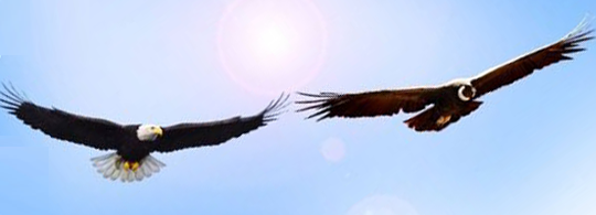 The Prophecy of the Condor and Eagle