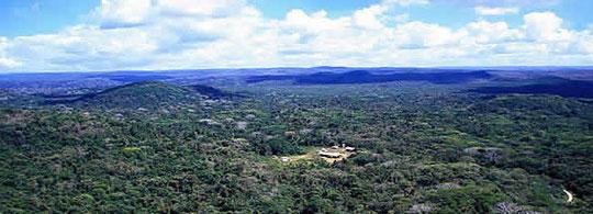 Mexico zet de toon in bosbeheer