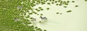 Unieke foto's van Botswana's fauna en flora. Indrukwekkend.