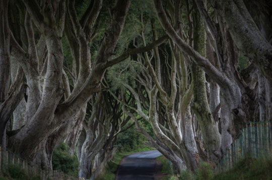 dark-hedges-ierland