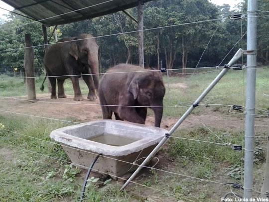 olifant-nepal-2