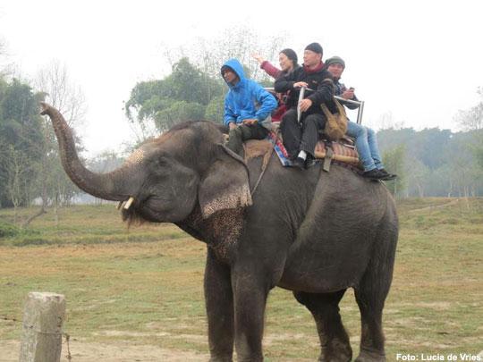 olifant-nepal