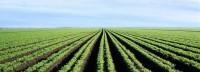 Biologische landbouw goed voor overbevolkte planeet