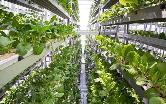 verticale-landbouw-2