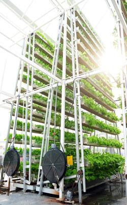 verticale-landbouw