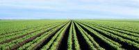 Grote doorbraak in voedselzekerheid met Nederlandse kennis over zilte landbouw